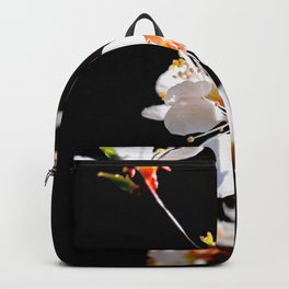 Beautiful, Delicate Japanese Apricot Flowers Against The Black Background Backpack
