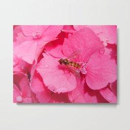 Hoverfly & Pink! Metal Print