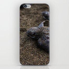 Baby Leather back Sea Turtle iPhone Skin