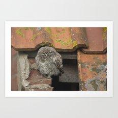 LITTLE OWL ON THE ROOF Art Print