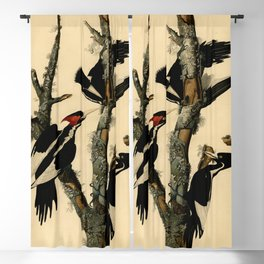 Ivory-billed Woodpecker (Campephilus principalis) Blackout Curtain