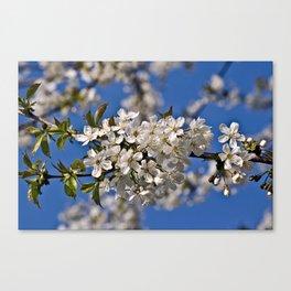 Magic White Cherry Blossom Dream Canvas Print