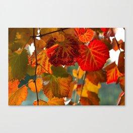 Autumn leaves 1 Canvas Print