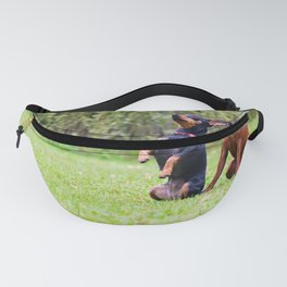 Outdoor portrait of two a miniature pinscher dogs sitting on the grass Fanny Pack