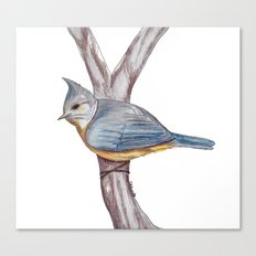 Grey-crested Tit Canvas Print