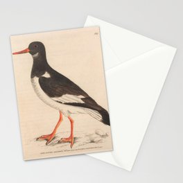 Pied Oyster-catcher, haematopus ostralegus15 Stationery Cards