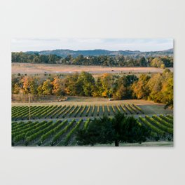 Vineyards Canvas Print