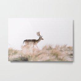 Deer in the dunes  Metal Print