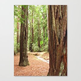 Armstrong Woods 3385 Canvas Print