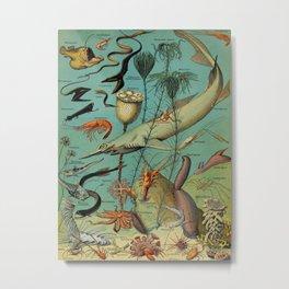 Strange Unique Ocean Animals Vintage Scientific Illustration French Language Encyclopedia Lithograph Metal Print