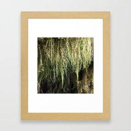 Moss Dew Drops Framed Art Print