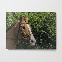 Blind horse Metal Print