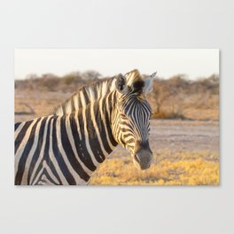Lone Zebra - Head only, landscape Canvas Print