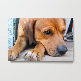 Dogs Rule the World Metal Print