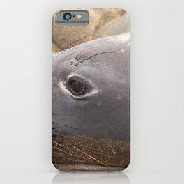 Elephant Seal iPhone Case