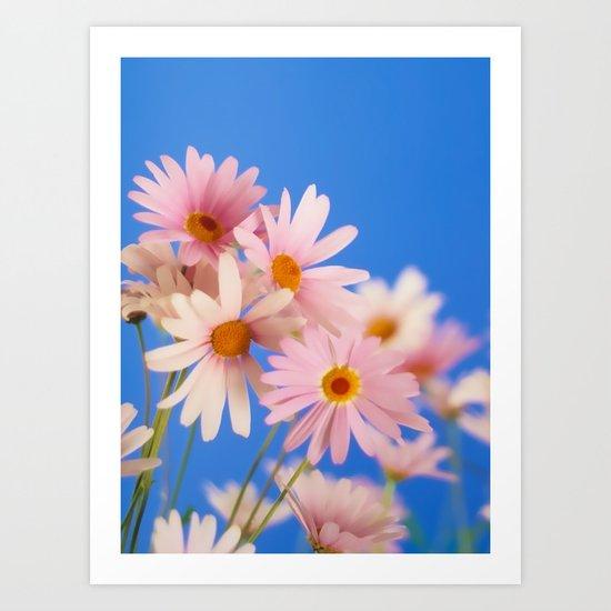 Soft Pink Daisies Art Print