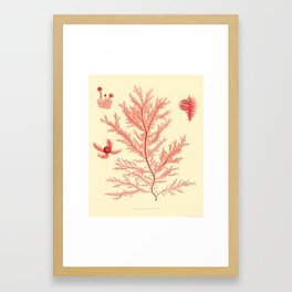 Rosy Botanical: an Adaptation of a Coral-Colored 19th-century Botanical Drawing Framed Art Print