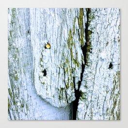Weathered Barn Wall Wood Texture Canvas Print