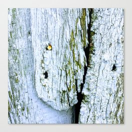 Weathered Barn Wall Wood Texture Canvas Print