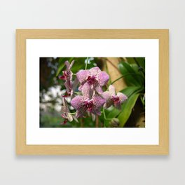 Multi colored Orchid Framed Art Print