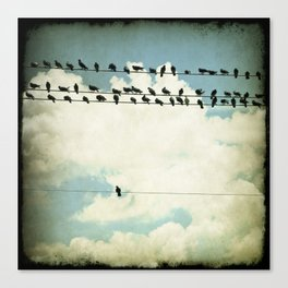 Many and One - photograph of birds on a line Canvas Print