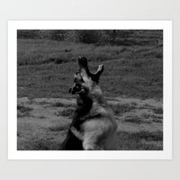 german shepherd Art Prints featuring German Shepherd by RK-K9