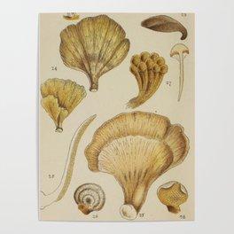 Naturalist Mushrooms Poster