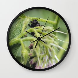 Bumble bee collecting pollen from a Russian Comfrey flower. Wall Clock