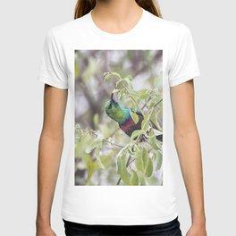 Marico Sunbird T-shirt
