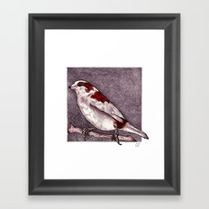 Society Finch Framed Art Print