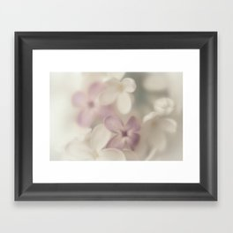 Lilac Framed Art Print
