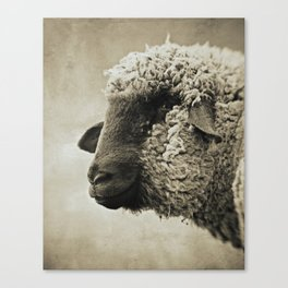 SHEEPISH GRIN - Old Friends Collection Canvas Print