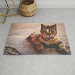 Cute Young Tabby Cat Kitten Kitty Pet Rug
