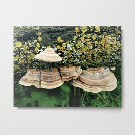 Fungi and Lichen Metal Print
