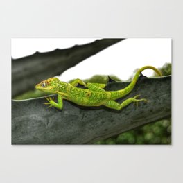 The Knight Anole Canvas Print