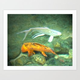 Coy Fish Art Print