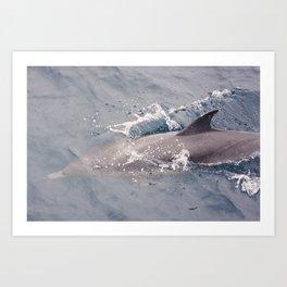 Gray Dolphin Art Print