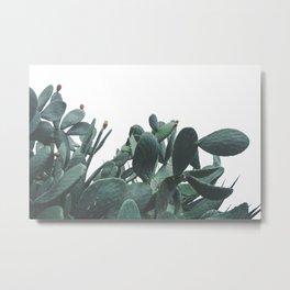 Fruit Cactus Desert Metal Print