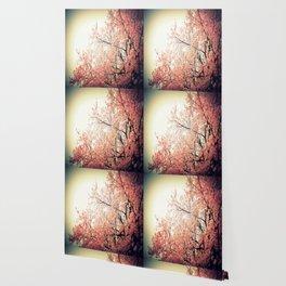 Cherry Blossom Nostalgia Wallpaper