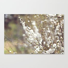 Fresh Popcorn Canvas Print