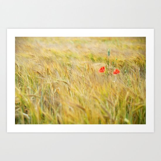 Two lonely poppies Art Print