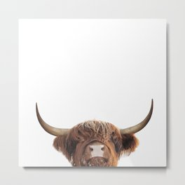 Highland cow, brown cow Metal Print