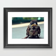 Poor Birdy Framed Art Print