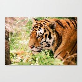 golden eyed tiger Canvas Print