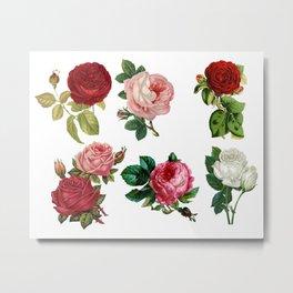 amaizing cute roses Metal Print