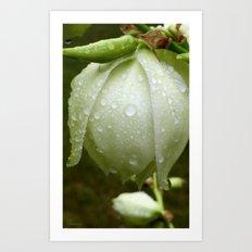 Yucca Rain Drops Art Print