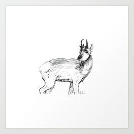 Pronghorn Art Print