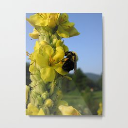Golden Pollinator Metal Print