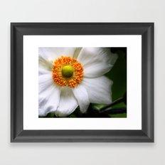 A white summer flower with an orange center Framed Art Print
