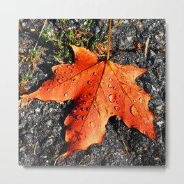 Water Drops On Red Leaf Metal Print